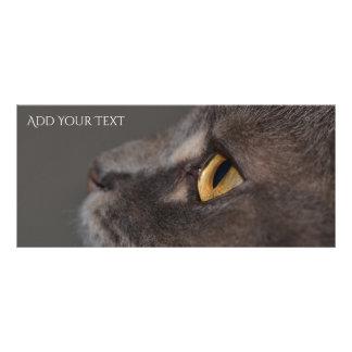 Tarjeta Publicitaria Ojo-Macro del gato de Shirley Taylor