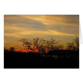 Tarjeta Puesta del sol seca del bosque