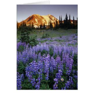 Tarjeta Puesta del sol sobre Mt. Adams y un prado