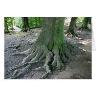 Tarjeta Raíces del árbol