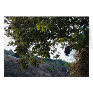 Tarjeta Rastros del parque del barranco de Franklin