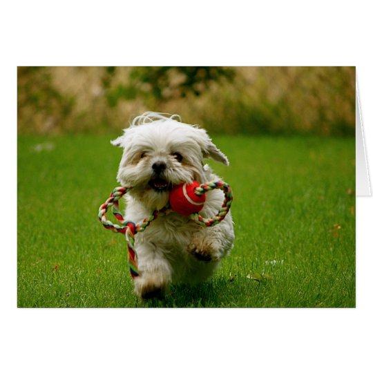 Tarjeta Recogida del perrito
