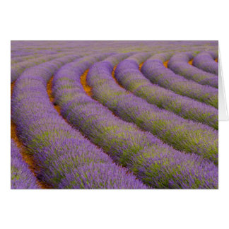 Tarjeta Región de Francia, Provence. Filas curvadas de