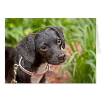 Tarjeta Rescate Delilah del perrito de la libra