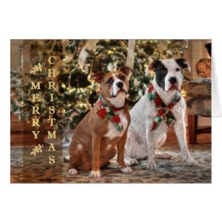 Tarjeta Rescate lindo Pitbull del navidad y perro de