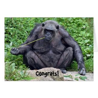 Tarjeta retiro-chimpancé en roca