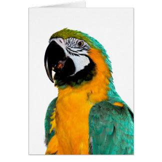 Tarjeta retrato colorido del pájaro del loro del macaw del