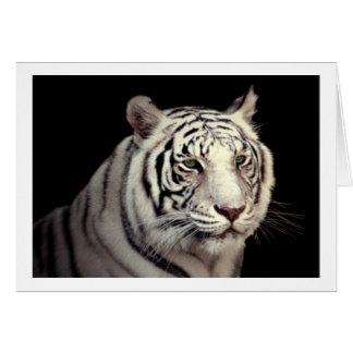 Tarjeta Retrato de un tigre de Bengala blanco