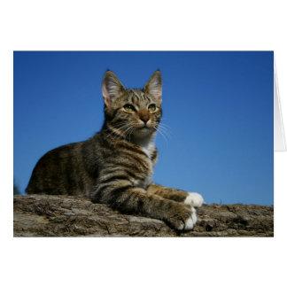 Tarjeta [Retrato real] del gato - cualquier ocasión