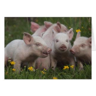 Tarjeta Reunión de los tres pequeños cerdos