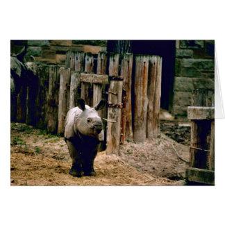 Tarjeta Rinoceronte indio