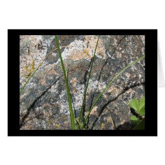 Tarjeta Roca, liquen, flora