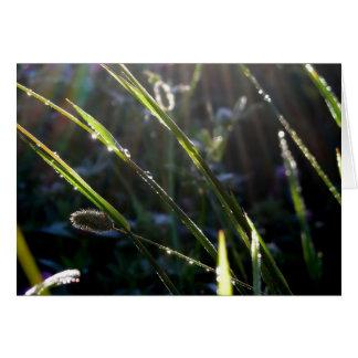 Tarjeta Rocío en hierba
