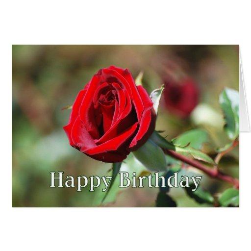 Tarjeta romántica del rosa rojo del feliz cumpleañ
