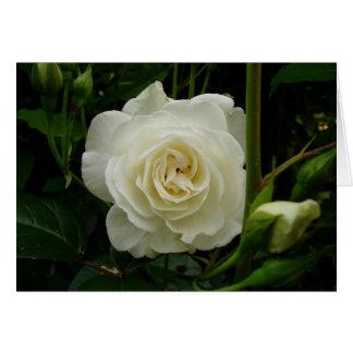 Tarjeta Rosa blanco