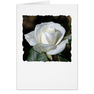 Tarjeta Rosa blanco con rocío