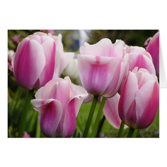 Tarjeta rosada de los tulipanes