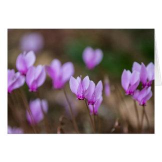 Tarjeta rosada del Cyclamen