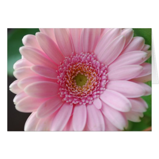 Tarjeta rosada del Gerbera