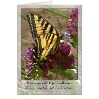 Tarjeta Sabio color de rosa con el tigre Swallowtail -