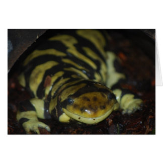 Tarjeta salamander de tigre