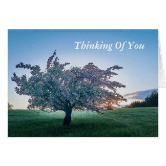 Tarjeta Salida del sol de la primavera, árbol florecido en
