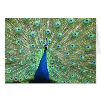 Tarjeta - saludo - plumas de cola del pavo real