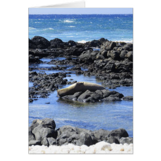 Tarjeta Sello hawaiano del monje