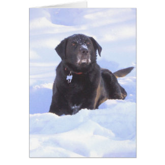 "Tarjeta ""Sidney el perro de la maravilla """