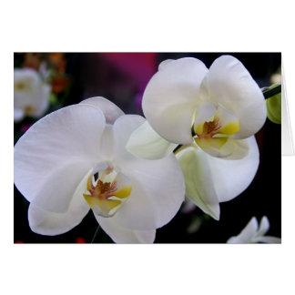 Tarjeta Simplemente orquídeas
