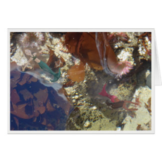Tarjeta Sirenas de la piscina de la marea
