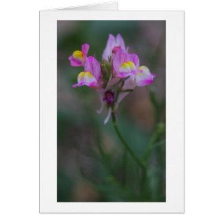 Tarjeta snapdragons rosados