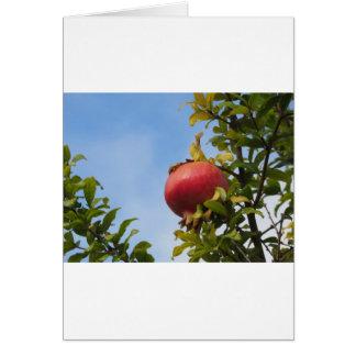 Tarjeta Sola fruta roja de la granada en el árbol en hojas