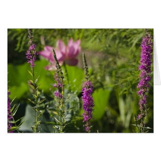 Tarjeta Sombras del rosa y de la púrpura