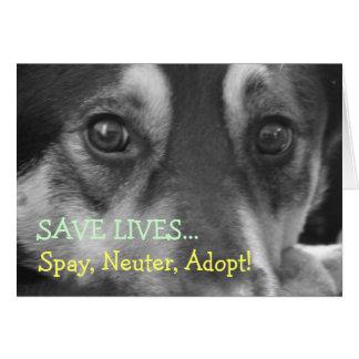Tarjeta Spay el neutro adoptan el rescate del perro casero