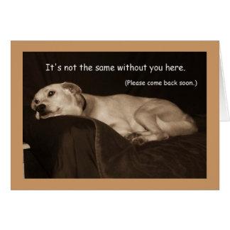 Tarjeta Srta. amarilla You Card del perro esquimal I del