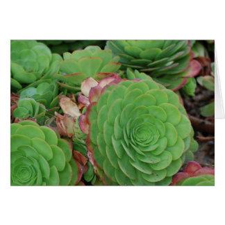 Tarjeta Succulents (espacio en blanco)