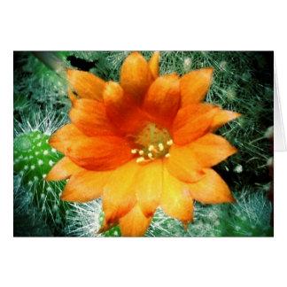 Tarjeta Sun besó la flor del desierto le agradece las