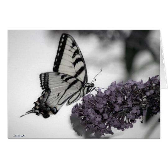 Tarjeta Swallowtail y sombras
