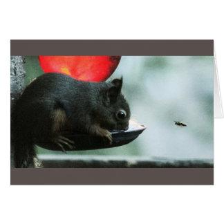 Tarjeta Tararear-Ardilla y la abeja en el alimentador