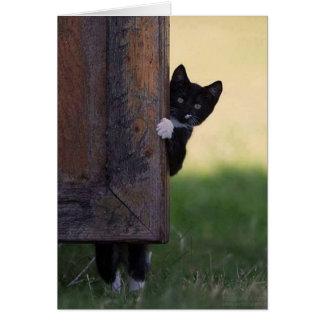Tarjeta ¡Tarjeta en blanco del gato - condolencia,