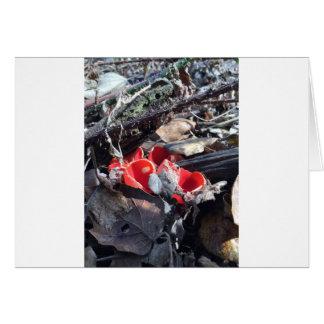 Tarjeta Tazas y hojas rojas