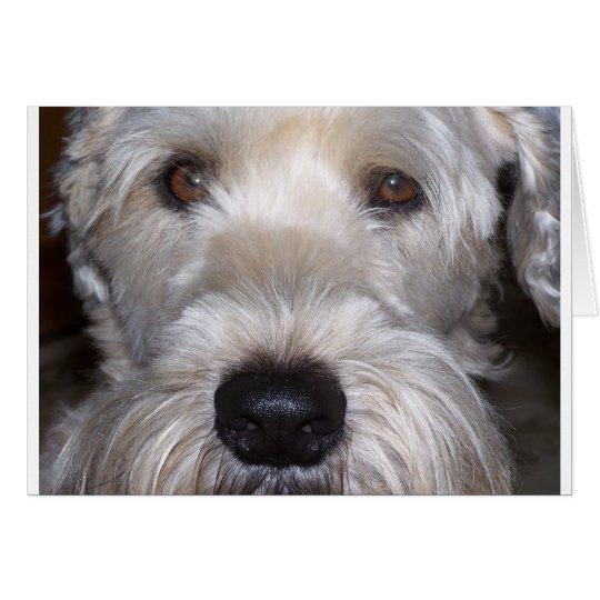 Tarjeta Terrier de trigo suavemente revestido