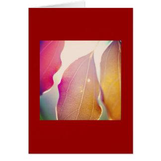 Tarjeta The Sun brilla a través de las hojas