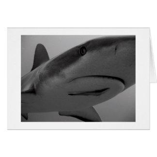 Tarjeta Tiburón del Caribe del filón
