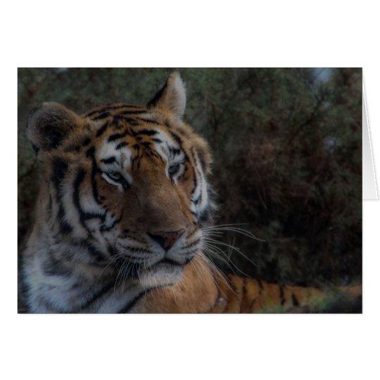 Tarjeta Tiger Greeting Card-Tarjeta Tigre felicitacion