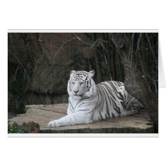 Tarjeta Tigre blanco