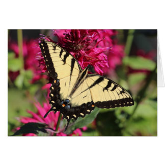 Tarjeta Tigre del este Swallowtail en bálsamo de abeja