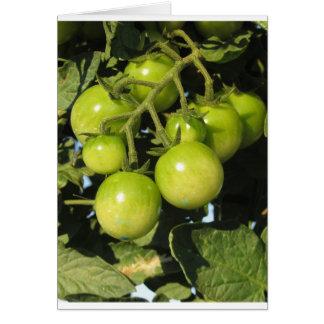 Tarjeta Tomates verdes que cuelgan en la planta en el