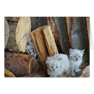 Tarjeta Tres gatitos en la leñera